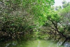 遗产沼泽地 免版税库存图片