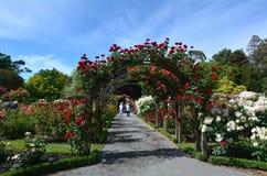 遗产玫瑰园在克赖斯特切奇植物园里,新的Ze 库存照片