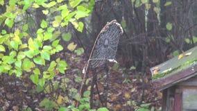 遗弃蜂箱在老农村庭院和spiderweb里 股票视频