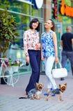 遛典雅的夫人在城市街道上的狗 免版税库存图片