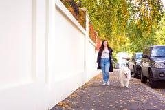 遛现代的少妇一条逗人喜爱的白色狗 免版税库存图片