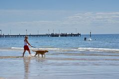遛的妇女在Frankston海滩的一条狗 免版税图库摄影