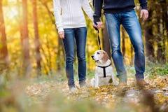 遛美好的年轻的夫妇一条狗在秋天森林里 库存照片