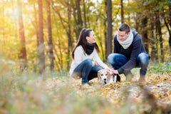 遛美好的年轻的夫妇一条狗在秋天森林里 库存图片