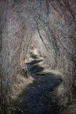 遥远的隧道道路穿过自然 免版税库存照片