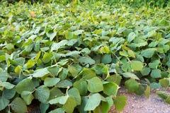 遮盖作物,土壤 免版税库存照片