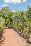 遮荫休息的斑点在农场的一个规则式园林里 免版税图库摄影