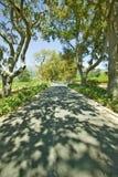遮荫压低Constantia酒葡萄园在开普敦,南非外面 库存图片