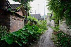 遮荫嫩绿的巷道在古老中国寓所里 免版税库存图片