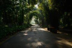 遮荫方式在晴朗的夏天早晨森林  库存图片