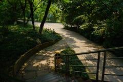 遮荫楼梯和路面在晴朗的夏天早晨 免版税库存图片