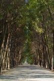 遮荫胡同在公园 免版税库存图片