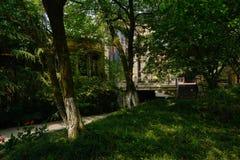 遮荫路边象草的草坪在晴朗的夏天早晨城市 免版税库存图片