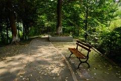 遮荫路边长凳在晴朗的夏天森林  免版税库存图片