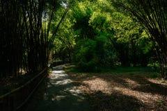 遮荫道路穿过在晴朗的夏天下午的茂盛的竹子 库存图片