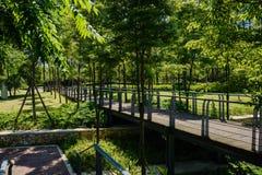 遮荫planked人行桥在晴朗的夏天嫩绿的城市 免版税库存图片