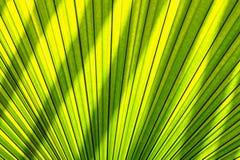 遮蔽叶子棕榈的光线影响 免版税库存照片