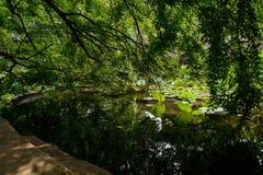 遮蔽湖岸在晴朗的夏天 免版税库存照片