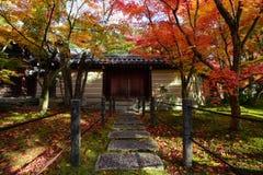 遮蔽道路的五颜六色的秋天槭树对一个传统日本门在京都 免版税库存图片