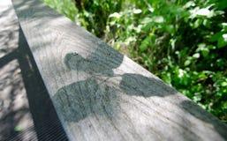 遮蔽casted由榆木在木路轨离开在Marymoor 免版税库存照片
