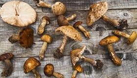 遮阳伞和牛肝菌蕈类蘑菇,可食的森林在木采蘑菇 库存照片
