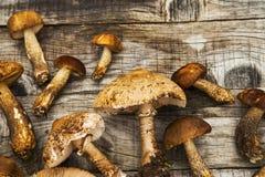 遮阳伞和牛肝菌蕈类蘑菇,可食的森林在木采蘑菇 免版税库存照片