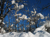 邀请多数下雪的结构树冬天 库存照片