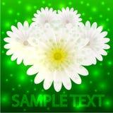 邀请的传染媒介创造性的花背景 库存照片