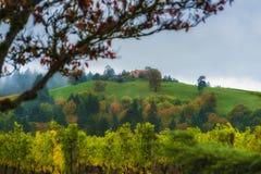 邓迪小山葡萄园风景 免版税库存照片
