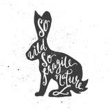 那么在野兔的狂放的那么易碎的自然字法 免版税库存照片
