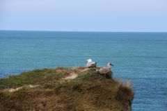 那些海鸥仍然调查距离并且看食物的方向 免版税库存图片