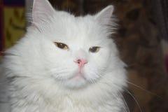 那只猫 免版税库存照片