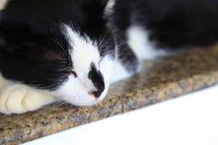 那只猫 免版税库存图片