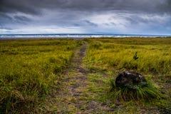 那导致在的海滩风雨如磐的晚上在长滩华盛顿的一串绿色象草的足迹 库存照片