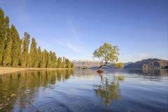 那Wanaka树和瓦纳卡湖海岸线, Wanaka,新西兰 免版税库存图片