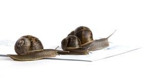 邮件蜗牛 库存照片