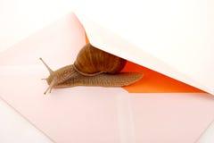 邮件蜗牛 库存图片