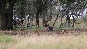 邮件小鹿 影视素材