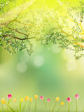 郁金香五颜六色的庭院在春天。EPS 10传染媒介 免版税库存图片