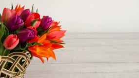 郁金香五颜六色的花束在木柳条筐的在与空间的白色背景您的文本的 免版税库存照片