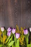 郁金香和含羞草花束  库存图片