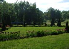 郁金香和树在Peterhof公园  库存图片