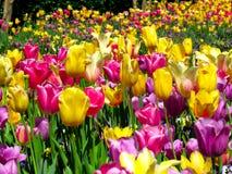郁金香和花世界  库存照片