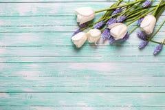 从郁金香和蓝色muscaries的边界在绿松石开花求爱 库存照片