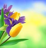 郁金香和虹膜美丽的春天花束在自然 库存照片