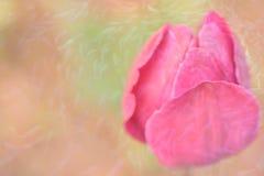 郁金香和金鱼 库存图片
