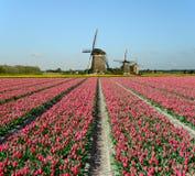 郁金香和风车在荷兰 免版税库存照片