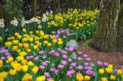 郁金香和黄水仙庭院在树丛里 图库摄影