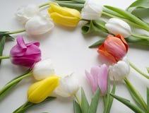郁金香圈子与空间的文本的 美丽的开花的郁金香花 背景背景卡片设计花卉例证 背景蓝色云彩调遣草绿色本质天空空白小束 春天背景与 库存图片