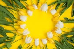 郁金香圈子在黄色背景的 免版税库存图片